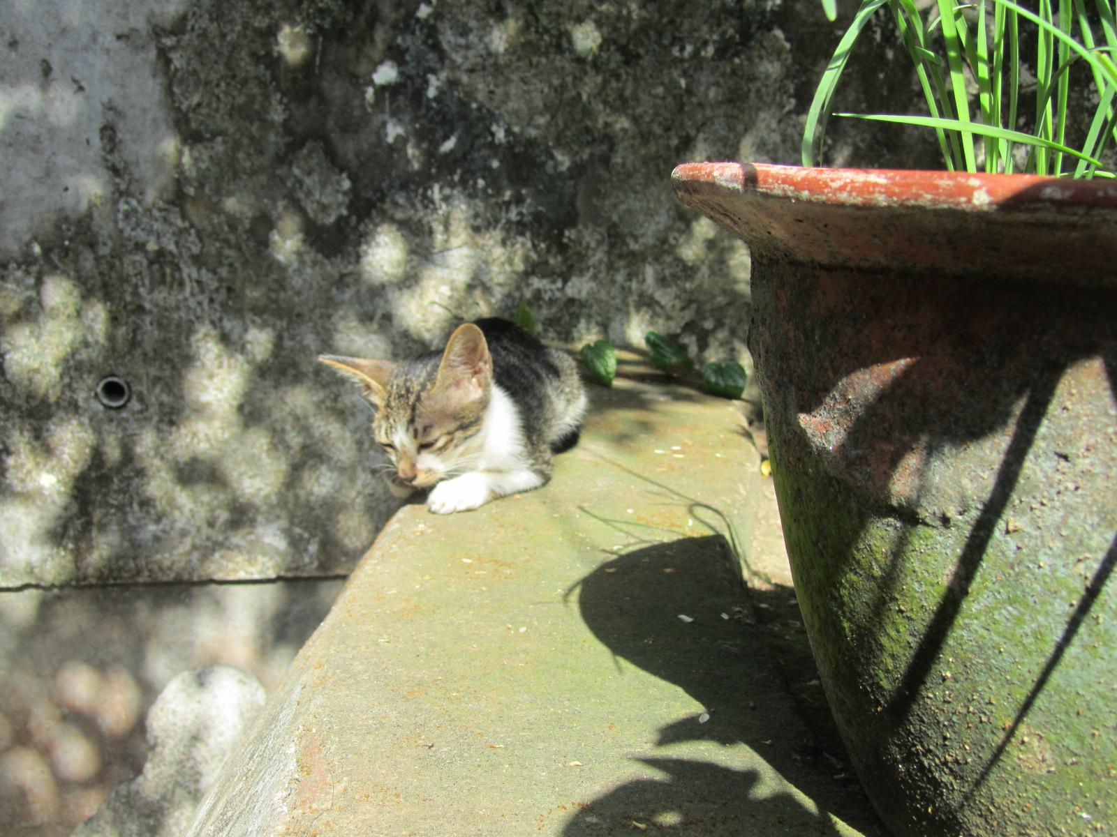 Anak Anak Kucing 37degree